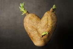 πατάτα καρδιών που διαμορ& Στοκ φωτογραφία με δικαίωμα ελεύθερης χρήσης