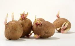 πατάτα Στοκ Φωτογραφία