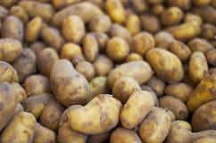 πατάτες ακατέργαστες Στοκ Φωτογραφία