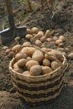 πατάτες καλαθιών Στοκ εικόνες με δικαίωμα ελεύθερης χρήσης