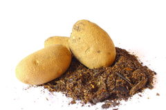 πατάτες ρύπου Στοκ φωτογραφία με δικαίωμα ελεύθερης χρήσης