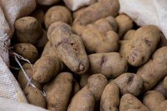 Πατάτες - 3 Στοκ Φωτογραφία