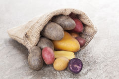 Πατάτες Delicous. Στοκ φωτογραφίες με δικαίωμα ελεύθερης χρήσης