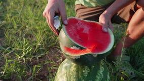 Πατέρας και γιος αγροτών που τρώνε το καρπούζι στον τομέα του οργανικού αγροκτήματος απόθεμα βίντεο