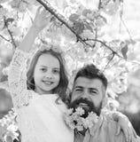 Πατέρας και κόρη στα ευτυχή αγκαλιάσματα προσώπων, υπόβαθρο sakura Παιδί και άτομο με τα τρυφερά ρόδινα λουλούδια στη γενειάδα, σ Στοκ Φωτογραφία