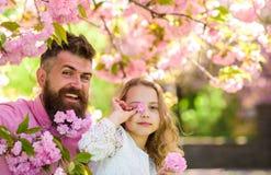 Πατέρας και κόρη στο ευτυχές παιχνίδι προσώπων με τα λουλούδια, υπόβαθρο sakura Κορίτσι με τον μπαμπά κοντά στα λουλούδια sakura  Στοκ φωτογραφία με δικαίωμα ελεύθερης χρήσης