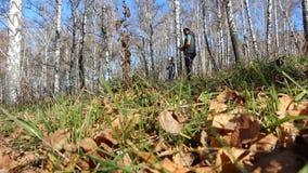 Πατέρας με την κόρη του στα χέρια που περπατούν στο δάσος φθινοπώρου απόθεμα βίντεο