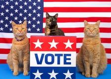 Πατριωτικές γάτες ημέρας εκλογής στην εξέδρα με το σημάδι ψηφοφορίας στοκ φωτογραφία με δικαίωμα ελεύθερης χρήσης