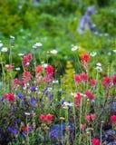Πατριωτικό Wildflowers Στοκ εικόνα με δικαίωμα ελεύθερης χρήσης