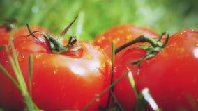 Παφλασμοί νερού στις κόκκινες ώριμες ντομάτες, σε αργή κίνηση μακρο πυροβολισμός απόθεμα βίντεο