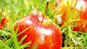 Παφλασμοί νερού στο κόκκινες ώριμες μήλο και τη χλόη, σε αργή κίνηση μακρο πυροβολισμός απόθεμα βίντεο