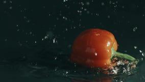 Παφλασμοί πιπεριών κουδουνιών στα ρηχά νερά Σε αργή κίνηση πυροβολισμός στο κόκκινο απόθεμα βίντεο