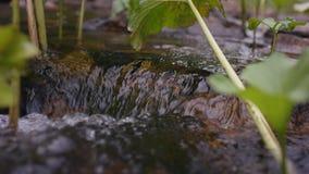 Παφλασμός νερού στον ποταμό Νερό στενό σε επάνω ποταμών με τις φυσαλίδες Φυσαλίδες νερού που επιπλέουν στην επιφάνεια της κινηματ Στοκ Εικόνες