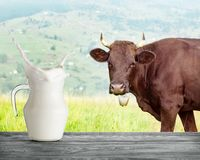 Παφλασμός σε μια κανάτα του γάλακτος στο υπόβαθρο μιας καφετιάς αγελάδας στοκ φωτογραφίες