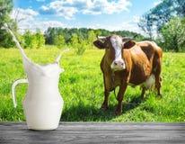 Παφλασμός του γάλακτος στην κανάτα στο κλίμα της αγελάδας στο λιβάδι στοκ εικόνες