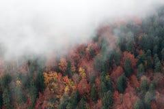 Παχιά ομίχλης δέντρα φθινοπώρου καλύψεων κίτρινα και πράσινα, τοπ άποψη Στοκ Εικόνα