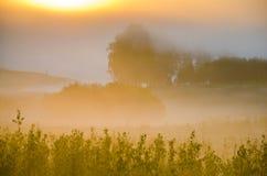 παχιά ομίχλη πρωινού στο θερινό δάσος Στοκ Εικόνα