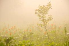 παχιά ομίχλη πρωινού στο θερινό δάσος Στοκ Φωτογραφίες