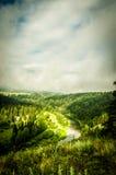 παχιά ομίχλη πρωινού στο θερινό δάσος Στοκ εικόνες με δικαίωμα ελεύθερης χρήσης