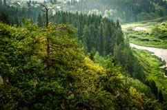 παχιά ομίχλη πρωινού στο θερινό δάσος Στοκ εικόνα με δικαίωμα ελεύθερης χρήσης