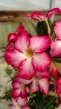 Παχιά λουλούδια εγκαταστάσεων στοκ φωτογραφίες