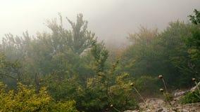 Παχιά πυκνή ομίχλη στο δάσος φθινοπώρου απόθεμα βίντεο