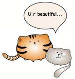 Παχιά συζήτηση γατών για την ομορφιά στοκ φωτογραφίες