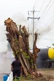 Παχύσαρκα άτομα με τα μεγάλα δέντρα Στοκ Φωτογραφία