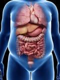 Παχύσαρκα όργανα τύπων διανυσματική απεικόνιση