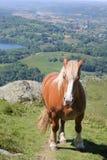 Παχύ άλογο Στοκ φωτογραφίες με δικαίωμα ελεύθερης χρήσης
