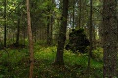 Παχύ πράσινο θερινό δάσος στοκ εικόνα με δικαίωμα ελεύθερης χρήσης