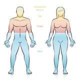 Παχύ πρωτεϊνικό θηλυκό αρσενικό ανθρώπινου σώματος μεταλλευμάτων νερού διανυσματική απεικόνιση