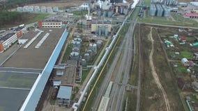 παχύ φυτό Εργοστάσιο για το λίπος και το έλαιο απόθεμα βίντεο