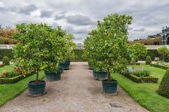 Παλάτι και κήπος Schonbrunn στη Βιέννη με τη διακόσμηση πάρκων και λουλουδιών Αντικείμενο επίσκεψης στη Βιέννη, Αυστρία στοκ φωτογραφίες με δικαίωμα ελεύθερης χρήσης