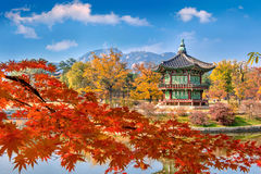 Παλάτι Gyeongbokgung και μαλακή εστίαση του δέντρου σφενδάμνου το φθινόπωρο, Kore Στοκ φωτογραφία με δικαίωμα ελεύθερης χρήσης