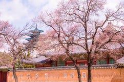 Παλάτι Kyeongbok στοκ εικόνα με δικαίωμα ελεύθερης χρήσης