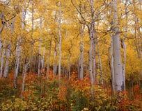 Παλέτα της Aspen φθινοπώρου στοκ εικόνες