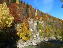 Παλέτα του φθινοπώρου στοκ εικόνα με δικαίωμα ελεύθερης χρήσης