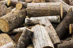 Παλαιά δάση Στοκ Εικόνες