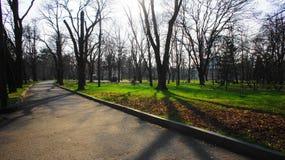 Παλαιά δέντρα στο πάρκο Στοκ Εικόνες