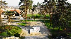 Παλαιά δέντρα στο πάρκο Στοκ εικόνα με δικαίωμα ελεύθερης χρήσης