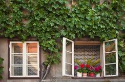 Παλαιά αγροτικά Windows Στοκ Εικόνες