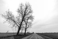 Παλαιά απόμερη βαλανιδιά δέντρων Στοκ Φωτογραφίες