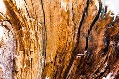 Παλαιά διάσπαση με ένα δέντρο τσεκουριών με την ανώμαλη δομή Καυσόξυλο, φωτογραφισμένη κινηματογράφηση σε πρώτο πλάνο Μικρό βάθος Στοκ φωτογραφίες με δικαίωμα ελεύθερης χρήσης