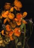 Παλαιά κίτρινα λουλούδια Στοκ Φωτογραφίες