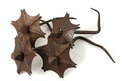 Παλαιά καρφιά σιδήρου Στοκ εικόνα με δικαίωμα ελεύθερης χρήσης