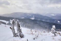 παλαιά κολοβώματα ξύλινα Στοκ Φωτογραφίες