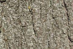 Παλαιά μακροεντολή φλοιών Στοκ εικόνα με δικαίωμα ελεύθερης χρήσης