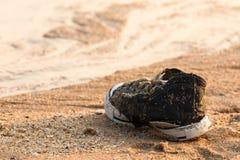 Παλαιά μαύρα πάνινα παπούτσια που εγκαταλείπονται Στοκ φωτογραφία με δικαίωμα ελεύθερης χρήσης