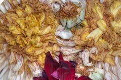 Παλαιά νεκρά λουλούδια Στοκ φωτογραφία με δικαίωμα ελεύθερης χρήσης